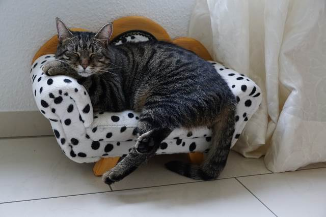Cat Bed for New Cat