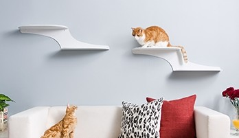 Wall Shelves for Cats