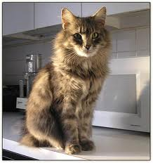 Kitty on the Counter