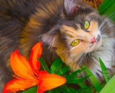 Cat with a Lilly