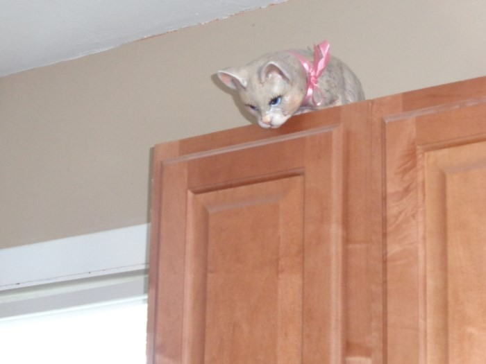 Cabinet Cat Looking Down