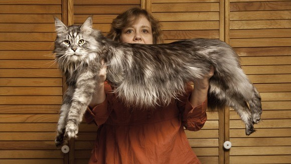 Stewie, Guiness Book of World Records largest cat