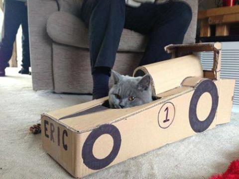 Cat in a toy car