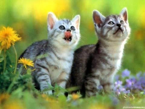 Two Kittens Watching a Bird