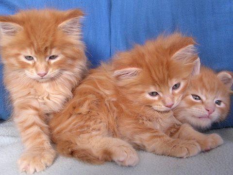 Cute Fuzzy Kittens