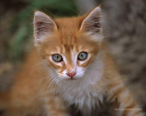 Cute Kitten's Face