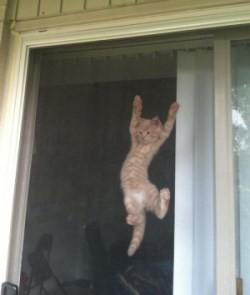 Cat on screen door