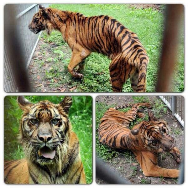 Nightmare Zoo