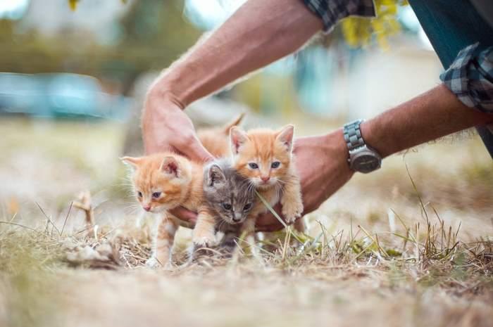 Picking up 3 kittens