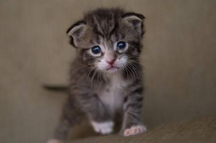 Kitten starting to walk