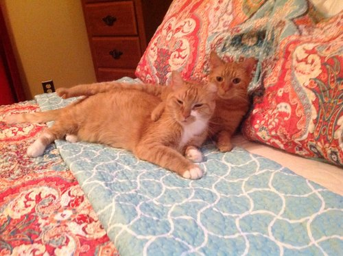 2 tamed feral cats
