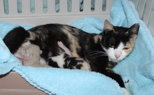 Cats Rescued from Hoarder
