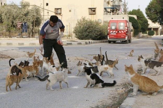 Alaa Feeds Stray Cats