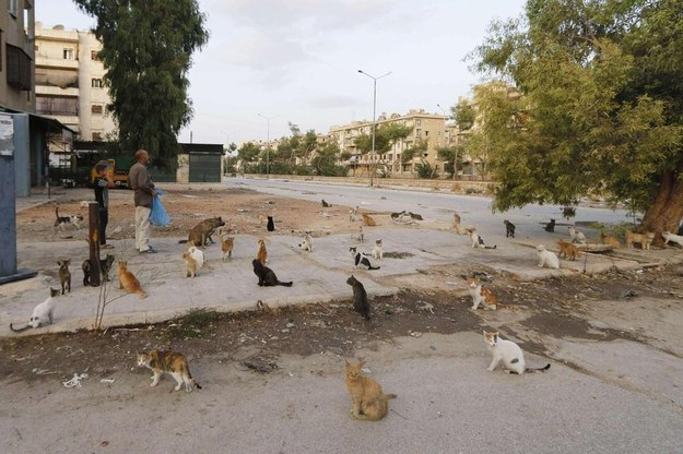 Cats Wait for Alaa to Feed Them