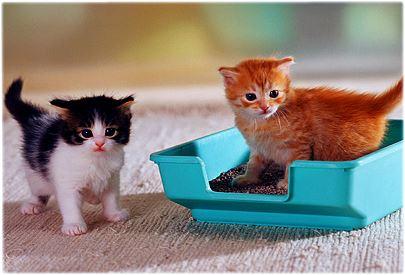 Kittens Using Litter Box
