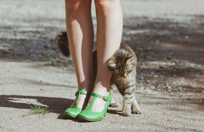 Kitty Rubbing Legs