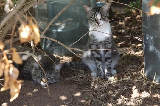 Cats rescued from hoarders house