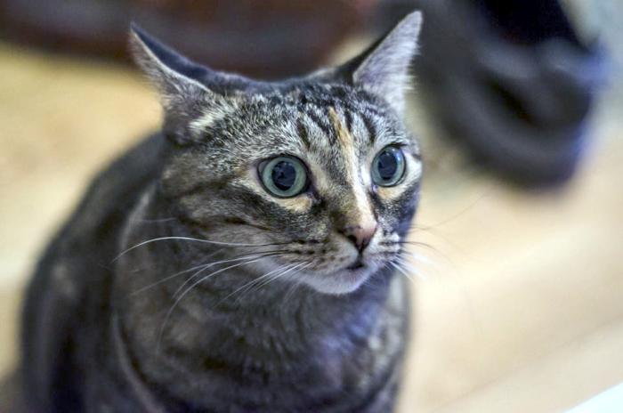 Startled Cat