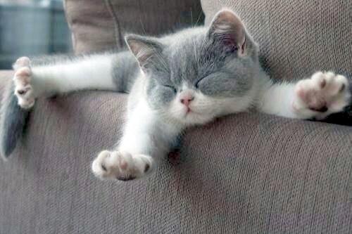 Big Cat stretch