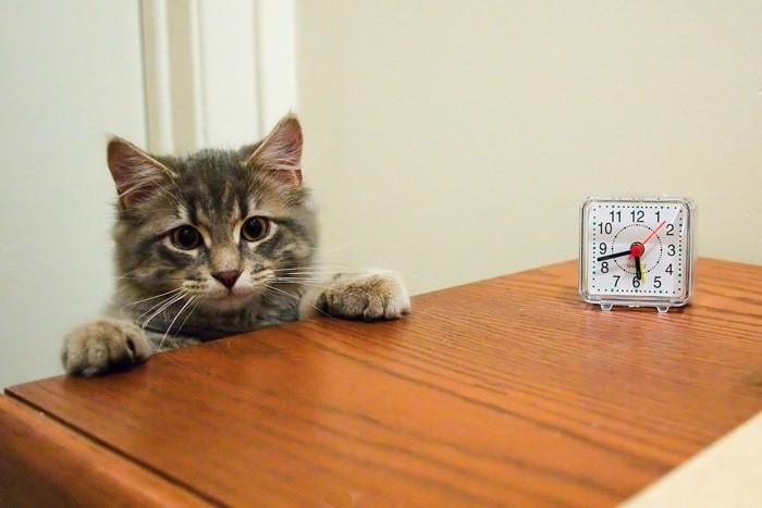 Cat with Clock