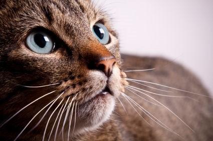 Kittys whiskers