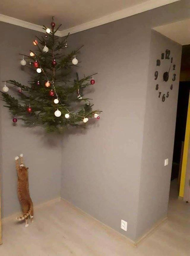 Kitty Can't Reach the Christmas Tree