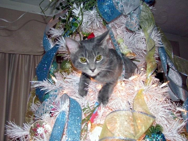 Cat in white Christmas Tree