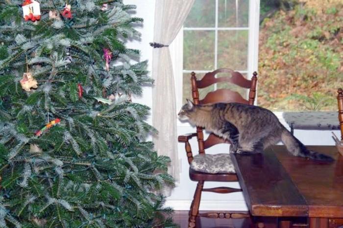 Cat Jumping on Christmas Tree