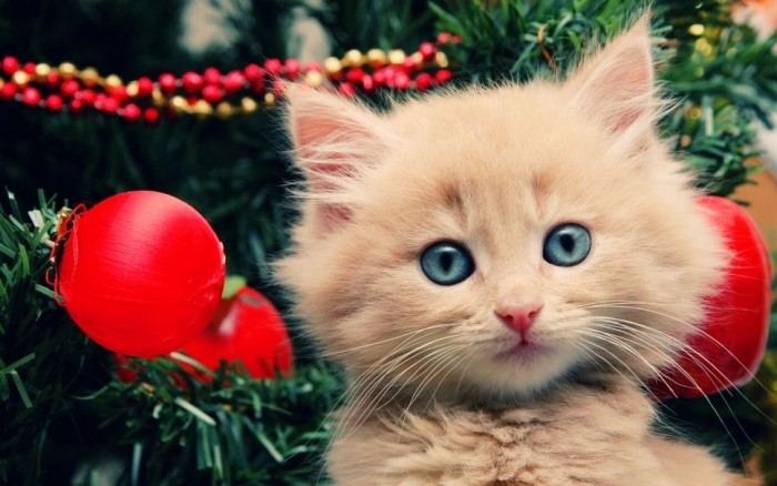 Kitty by Christmas Tree