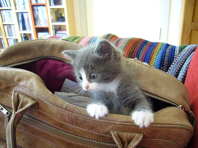 Kitty in the bag
