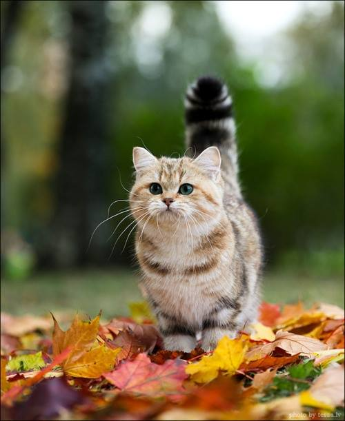 Cat in Fall Leaves