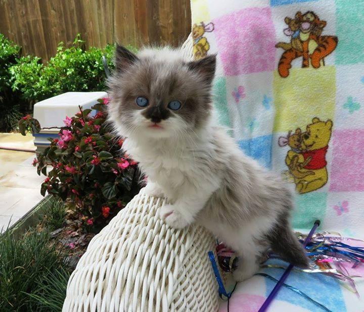 Sweet Kitty Outdoors