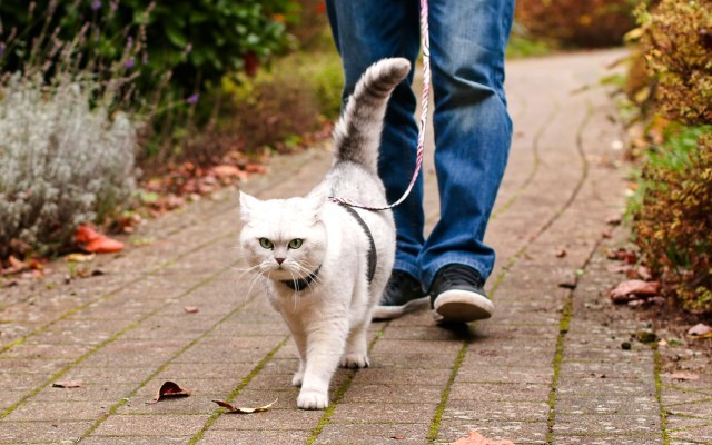 Walking the Cat on a Leash