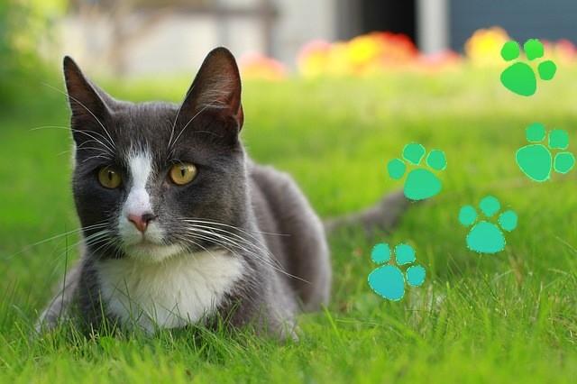 A Cats Carbon Footprint