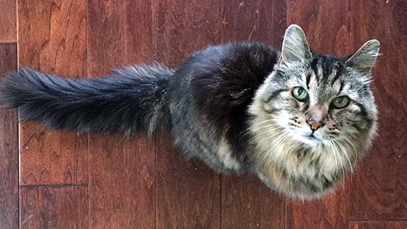 Corduroy Cat