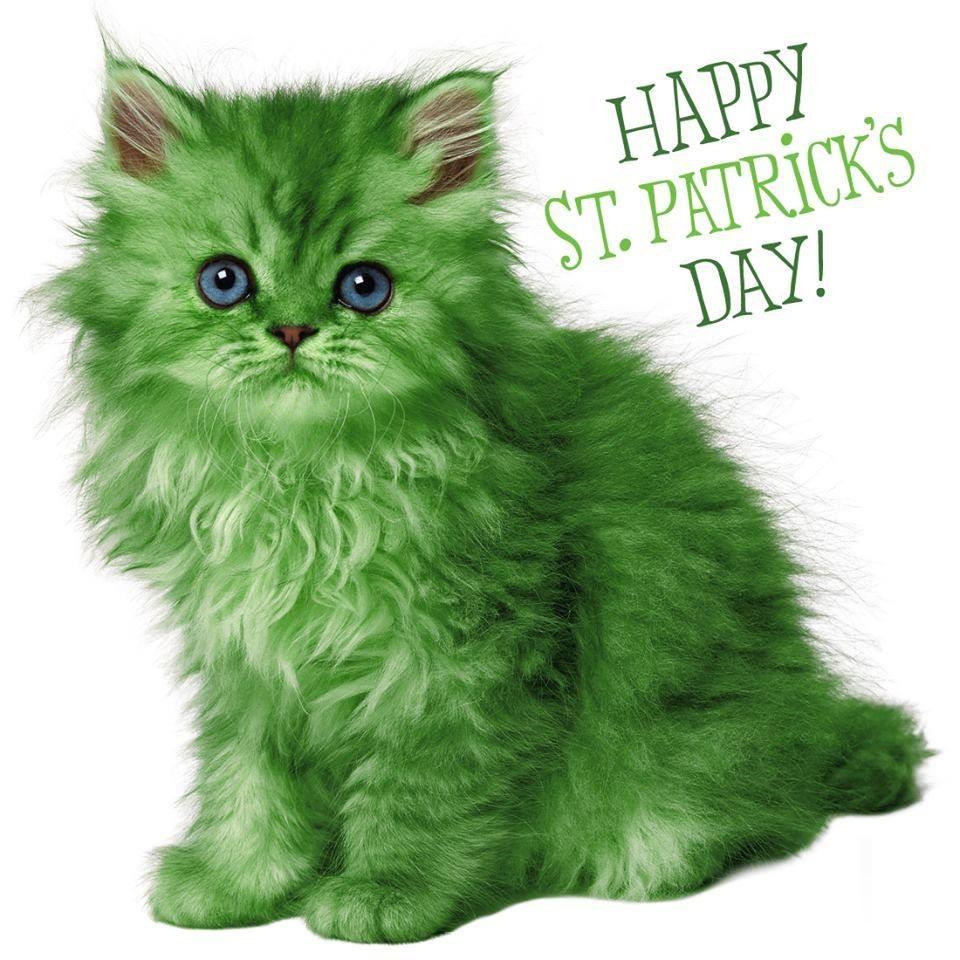 St. Pat's Cat