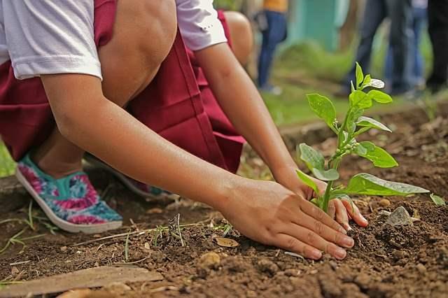 Planting Organics